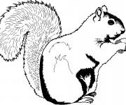Coloriage et dessins gratuit Ecureuil 7 à imprimer