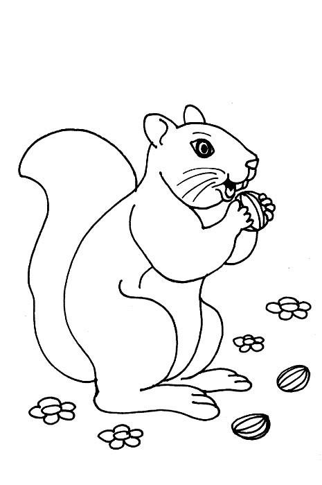 Coloriage et dessins gratuits Écureuil de Forêt qui mange à imprimer
