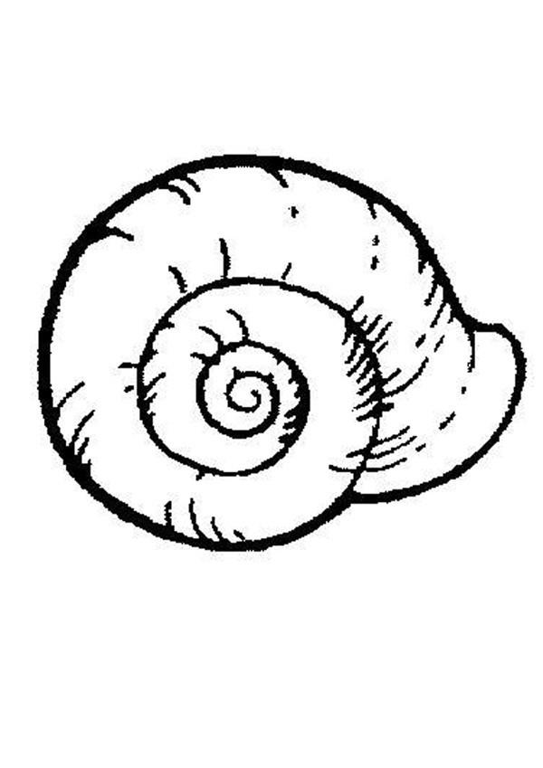 Coloriage Coquille D Escargot Dessin Gratuit A Imprimer