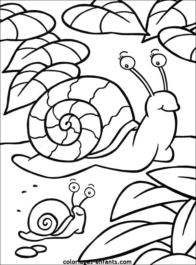 Coloriage Escargot et son bébé dessin gratuit à imprimer