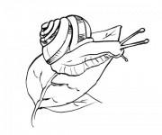 Coloriage Escargot réaliste sur feuille d'arbre