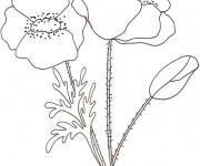Coloriage et dessins gratuit Coquelicot couleur à imprimer