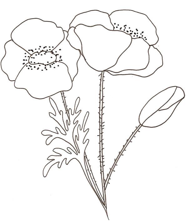 Coloriage et dessins gratuits Coquelicot couleur à imprimer