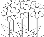 Coloriage et dessins gratuit Fleur à colorier à imprimer