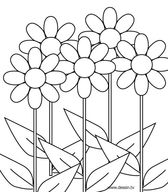 Coloriage fleur colorier dessin gratuit imprimer - Fleur coloriage a imprimer ...