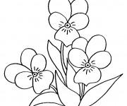 Coloriage Fleur au crayon noir