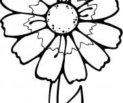 Coloriage et dessins gratuit Fleur Blanche à imprimer