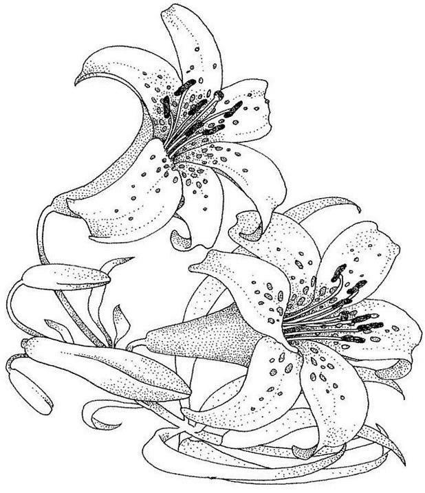 Coloriage et dessins gratuits Fleur blanche pour enfant à imprimer