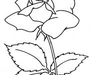 Coloriage et dessins gratuit Fleur de Camellia à imprimer