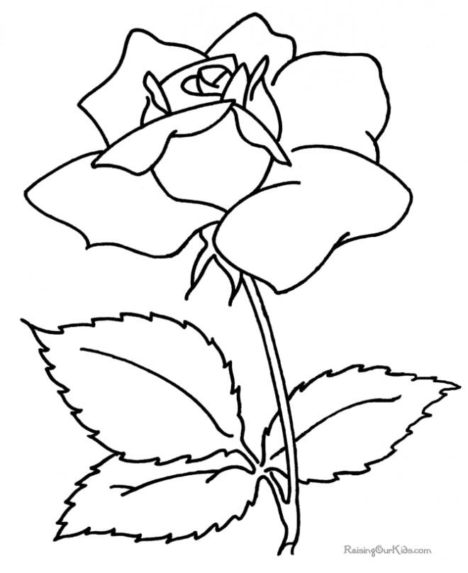 Coloriage et dessins gratuits Fleur de Camellia à imprimer