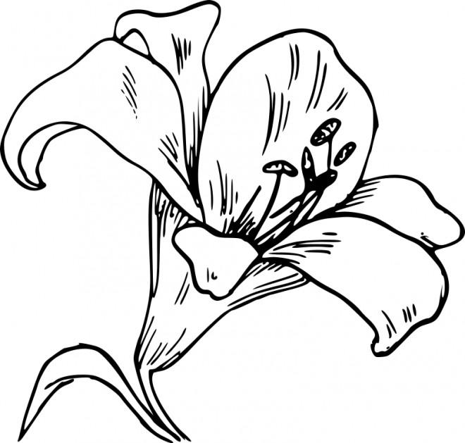 Coloriage et dessins gratuits Fleur de Lys à imprimer