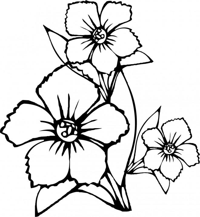 Coloriage et dessins gratuits Fleur en noir à imprimer