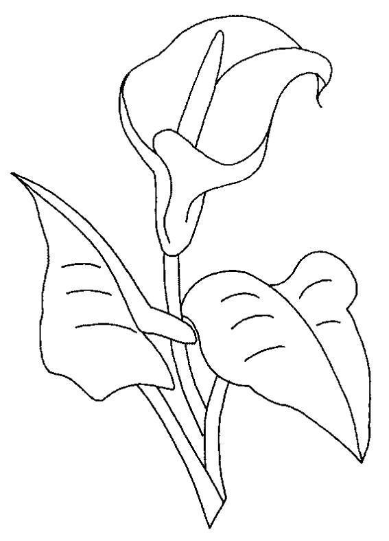 Coloriage et dessins gratuits Fleur magnifique à imprimer