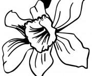 Coloriage Fleur Princesse