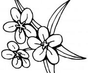 Coloriage Fleur Tiare Tahiti