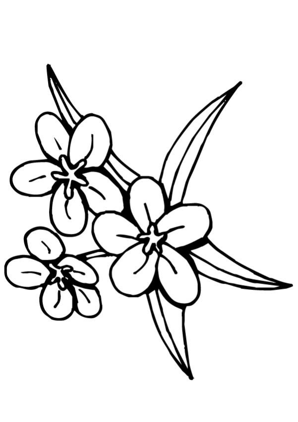 Coloriage fleur tiare tahiti dessin gratuit imprimer - Dessin de fleur en couleur ...