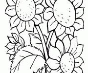 Coloriage Fleur Tournesol