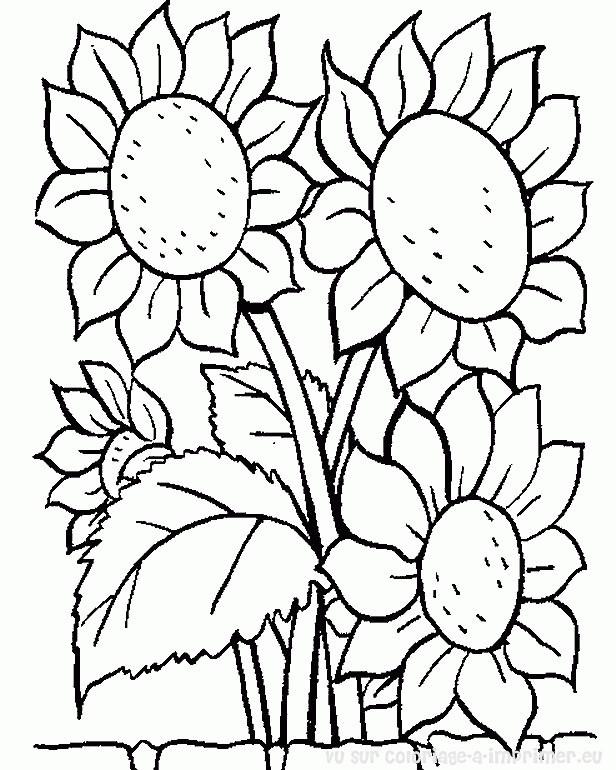 Coloriage et dessins gratuits Fleur Tournesol à imprimer