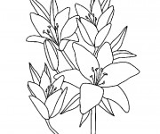 Coloriage et dessins gratuit Fleurs à télécharger à imprimer