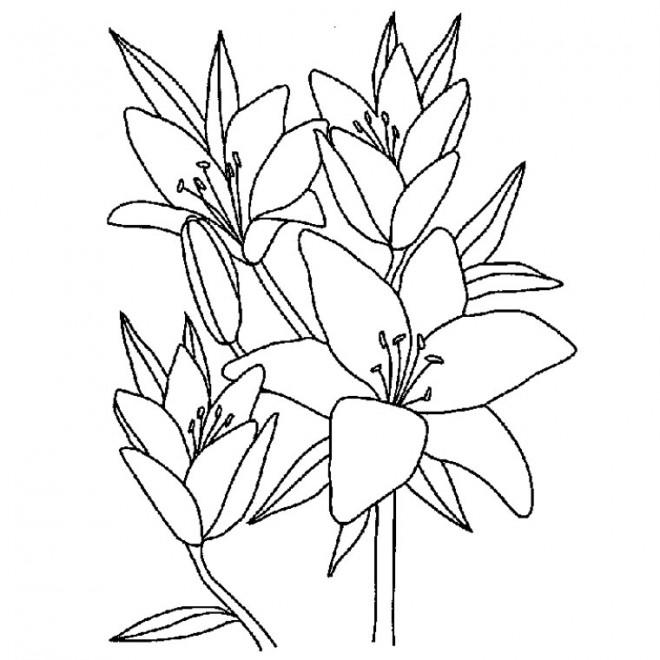 Coloriage et dessins gratuits Fleurs à télécharger à imprimer