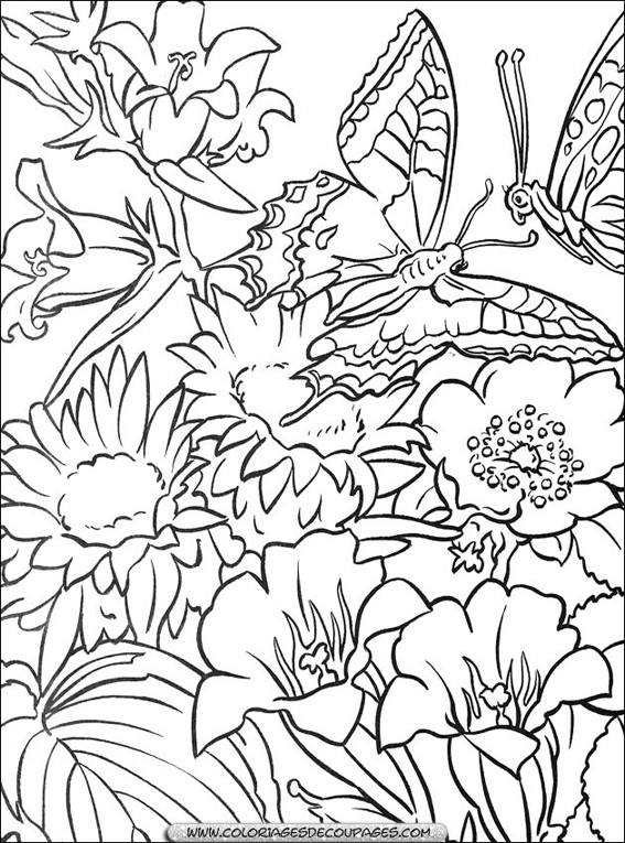 Coloriage fleurs et papillons dessin gratuit imprimer - Coloriage fleur 8 petales ...