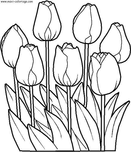 Coloriage fleurs et plantes dessin gratuit imprimer - Fleur a imprimer gratuit ...
