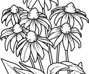 Coloriage Fleurs Violette