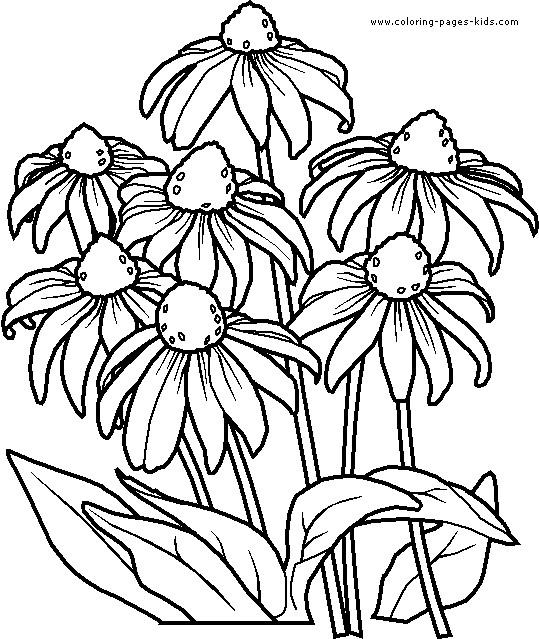 Coloriage Fleurs Violette Dessin Gratuit A Imprimer