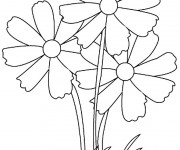 Coloriage Trois Fleur Adultes