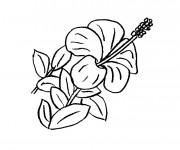 Coloriage Une belle Fleur