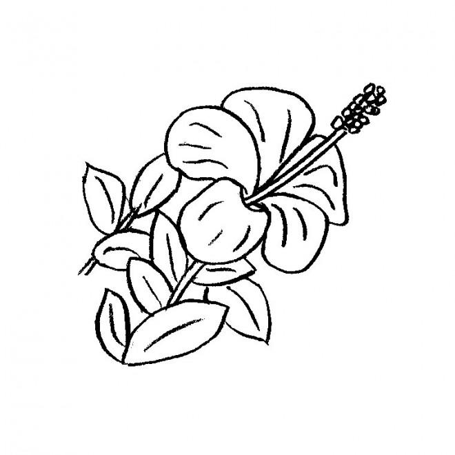 Coloriage une belle fleur dessin gratuit imprimer - Belle fleur a dessiner ...