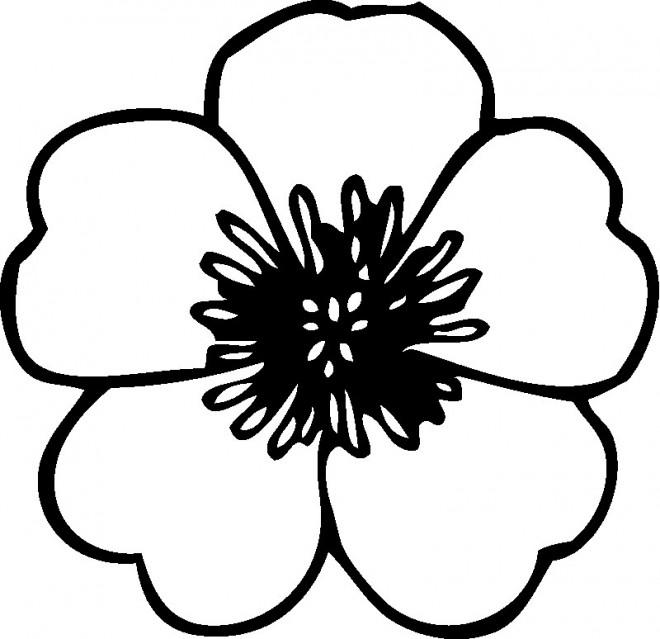 Coloriage et dessins gratuits Une Fleur ordinaire à imprimer