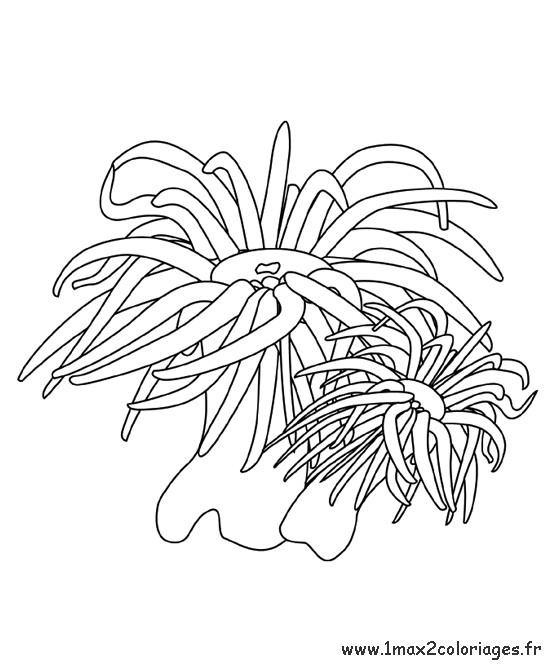 Coloriage et dessins gratuits Algues de mer à imprimer