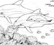 Coloriage et dessins gratuit Animaux Marins au crayon à imprimer