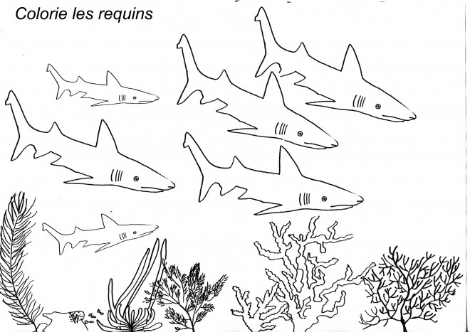 Coloriage les requins dans les fonds marins dessin gratuit imprimer - Coloriage de requin a imprimer gratuit ...