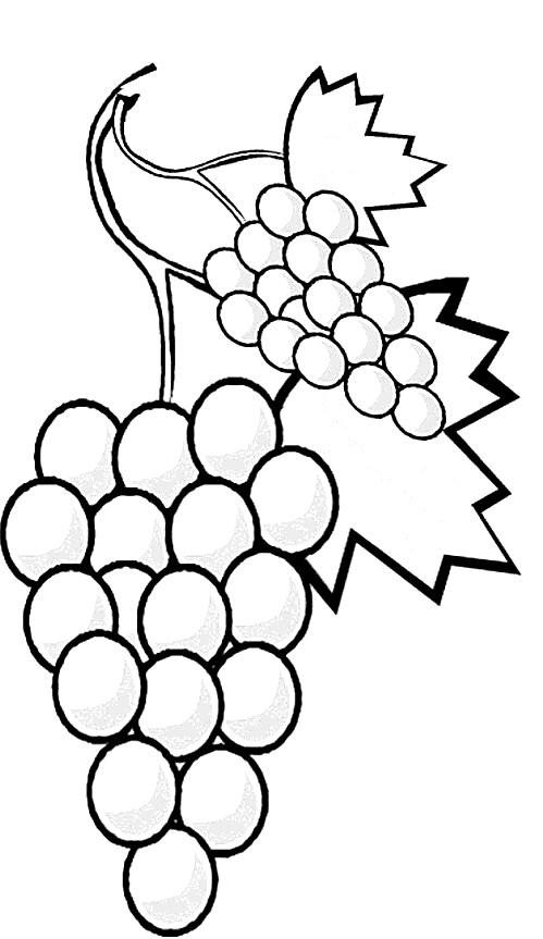 Coloriage et dessins gratuits Arbre fruitier Raisin à imprimer