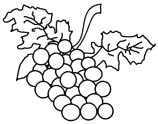 Coloriage et dessins gratuits Fruit Grappes de  Raisin à imprimer