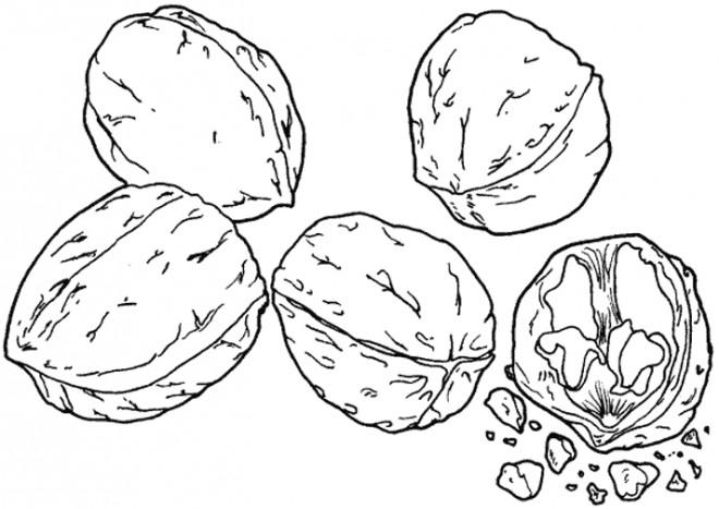 Coloriage et dessins gratuits Fruit sec à imprimer