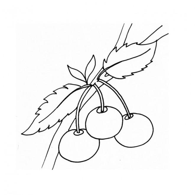 Coloriage et dessins gratuits Plante fruitière à imprimer