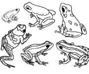 Coloriage et dessins gratuit Grenouille cycle de vie à imprimer
