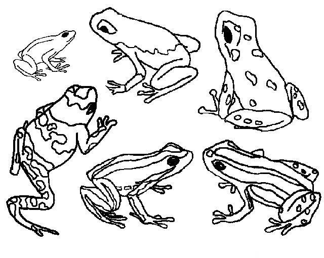 Coloriage et dessins gratuits Grenouille cycle de vie à imprimer