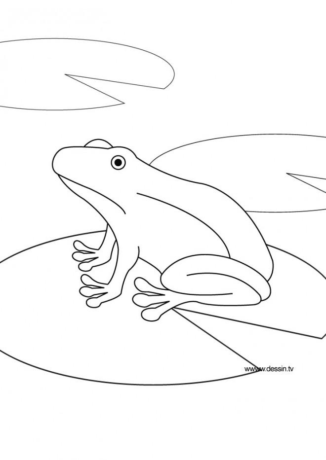 Coloriage et dessins gratuits Grenouille dans l'eau à imprimer