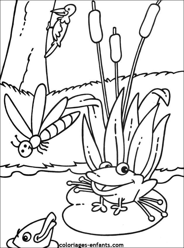 Coloriage et dessins gratuits Grenouille dans la nature à imprimer