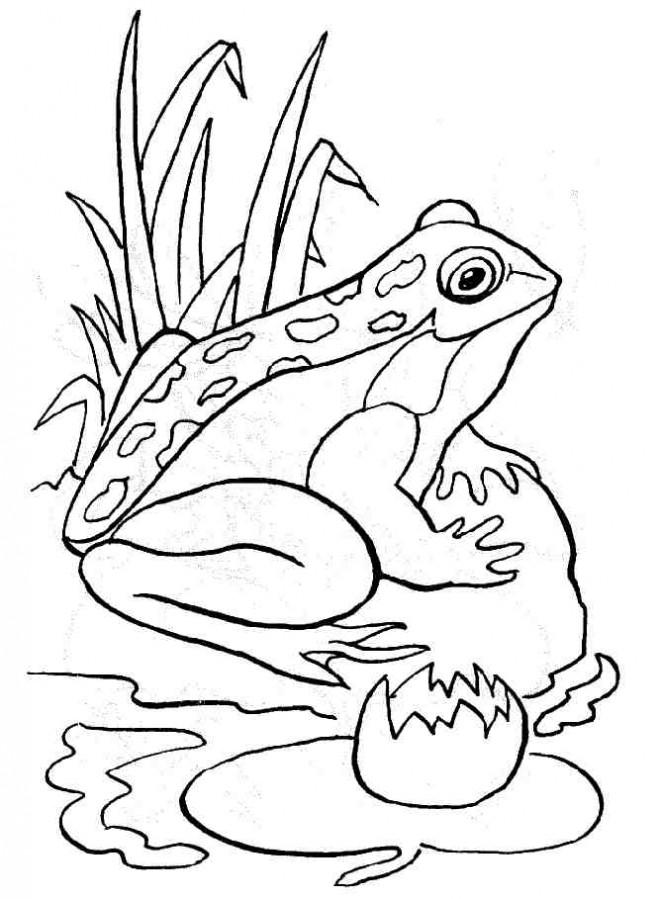 Coloriage et dessins gratuits Grenouille en plein air à imprimer