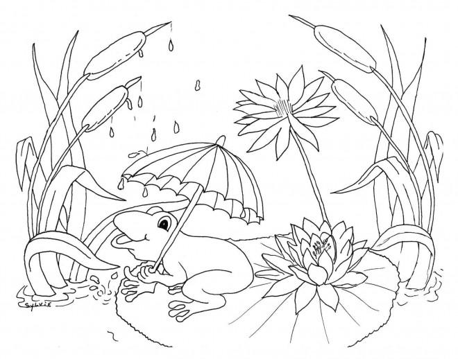 Coloriage Grenouille Avec Parapluie.Coloriage Grenouille Et Sa Parapluie Dessin Gratuit A Imprimer