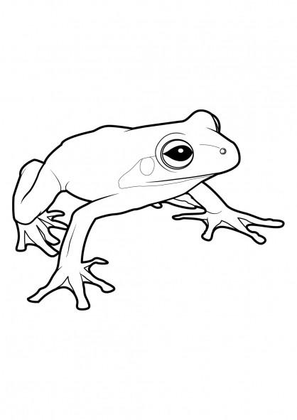 Coloriage et dessins gratuits Grenouille sans tache à imprimer