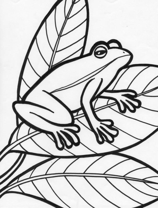 Coloriage et dessins gratuits Grenouille sur les Feuilles à imprimer