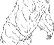 Coloriage dessin  Grizzly 17