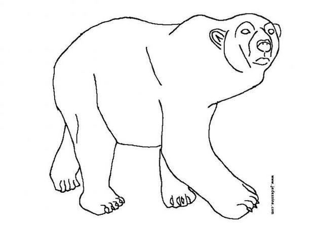 Coloriage et dessins gratuits Grizzly à découper à imprimer