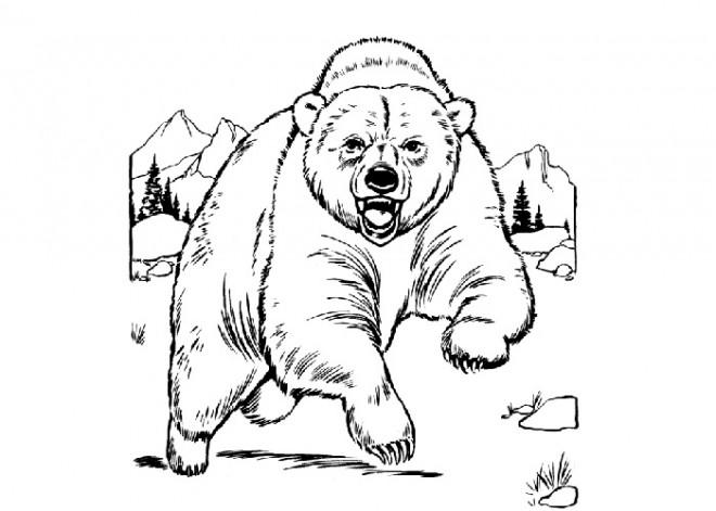 Coloriage grizzly au crayon dessin gratuit imprimer - Dessin de grizzly ...